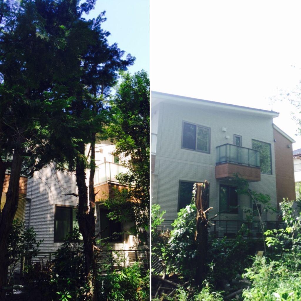大きい木切ってくれる会社埼玉東京おすすめ人気ニワショナル。