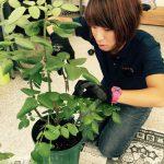 植木鉢観葉植物メンテナンス埼玉県手入れ管理業者