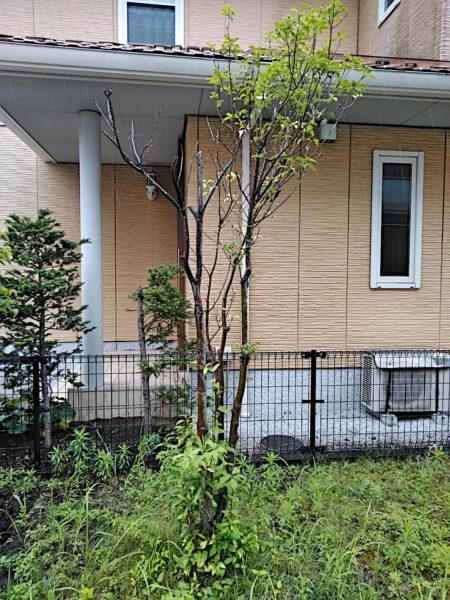 庭木、中木3本の伐採作業/埼玉県久喜市