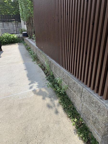 駐車場にタマリュウ植え込み、生垣消毒/東京都大田区