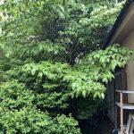 庭木の伐採作業/埼玉県春日部市