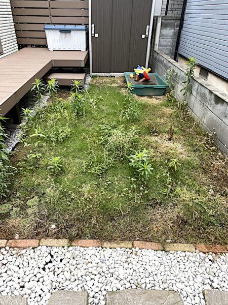 芝生の張り替え(TM9に張り替え)/埼玉県上尾市