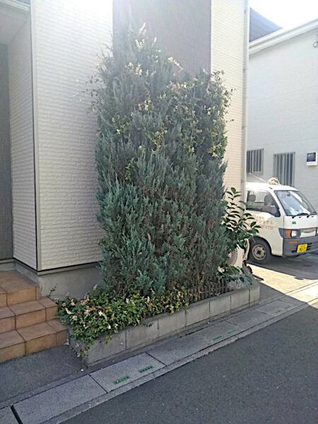 コニファー・カキノキ・ブルーカーペット・ハツユキカズラの抜根/埼玉県草加市