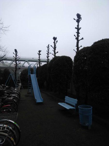 2.17 東京都北区 マンション 植栽管理