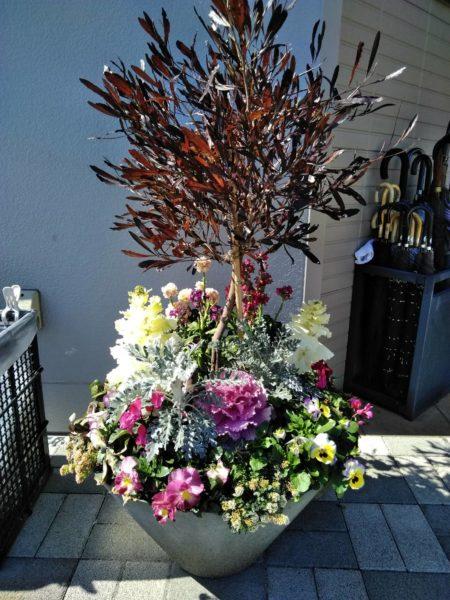 3.19 岩槻 霊園 植栽 植え替え