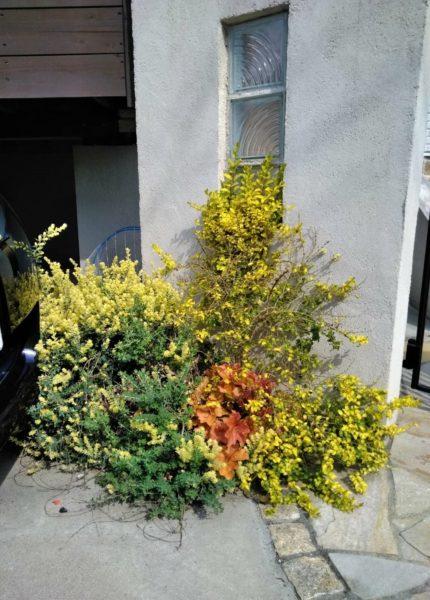 4.16 植栽 花植え さいたま市大宮区