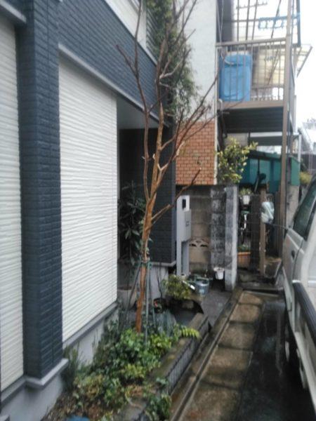3.14 東京都北区 支柱立て サルスベリ