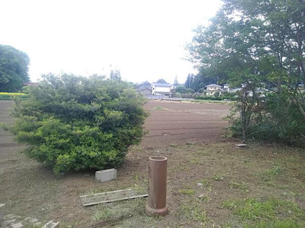 庭木の伐採作業(ウメ・ヒイラギ・ナンテン・カキ)/埼玉県入間市