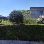 庭木の剪定(ハナミズキ、サザンカなど)/上尾市