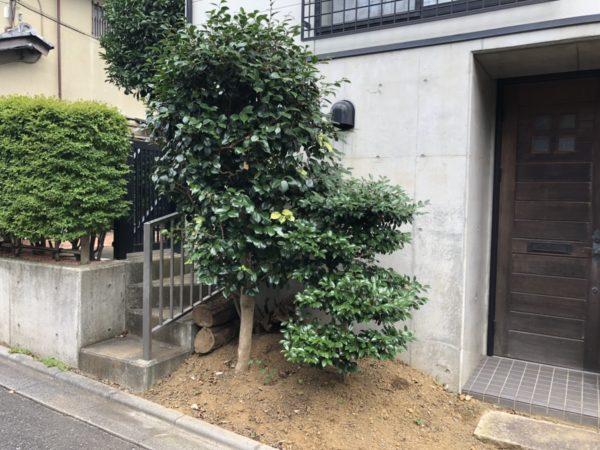 中古住宅の庭木(ツバキ)抜根/さいたま市