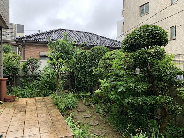ツバキ、サカキなど庭木の剪定・刈り込みとゲッケイジュの伐採/埼玉県上尾市