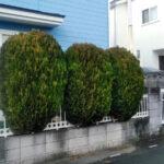 サザンカ・モミジ・ナンテン等植木の剪定作業と草取り/上尾市