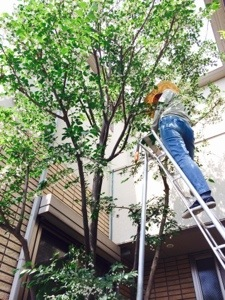 庭仕事上尾さいたま市港区新宿区目黒区人気