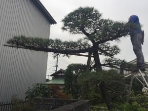 埼玉の庭師植木屋ニワナショナルは上尾の庭の専門店