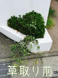 雑草取ります!庭の専門店ニワナショナル埼玉東京