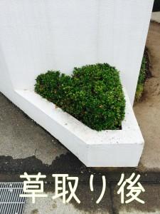 雑草取る業者です!庭の専門店ニワナショナル埼玉東京