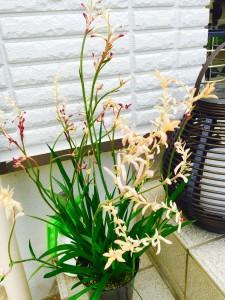 草花観葉植物の管理手入れなどの依頼は専門店ニワナショナルにお任せください!