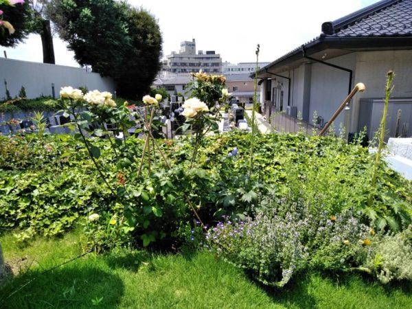 いわつき霊園植栽年間管理