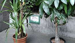 観葉植物のお手入れ・植え替え