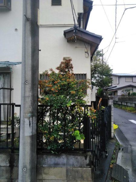 10.11さいたま市桜区庭木剪定