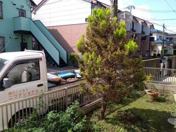 9.26さいたま市ゴールドクレスト伐根