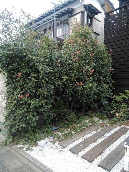 10.17庭木剪定さいたま市