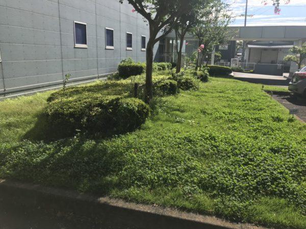 9.24三芳町 会社 芝刈り草刈り