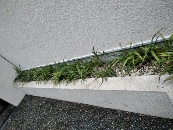 11.27 渋谷区 花植え 植栽メンテナンス