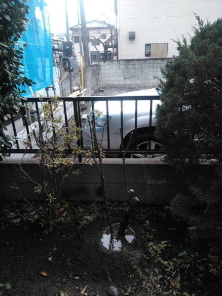 12.11 さいたま市北区 バラの剪定 移植