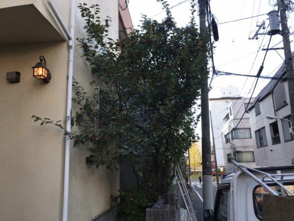 11.21 渋谷区 剪定