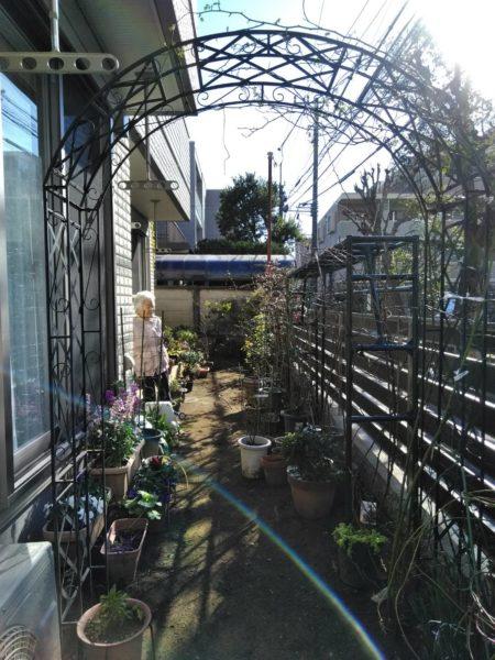 2.12 バラ 定植 剪定 誘引 東京都北区