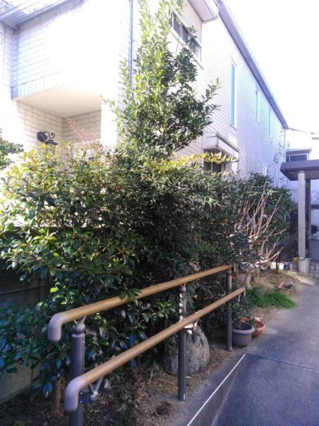 2.7 モッコク、モチ、ナンテンなど 庭木 剪定 さいたま市南区