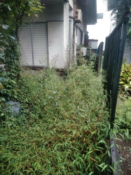 空き家の草刈り、除草剤散布/上尾市