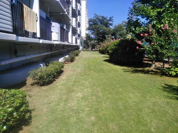 マンションの草刈り、芝刈り/東京都北区