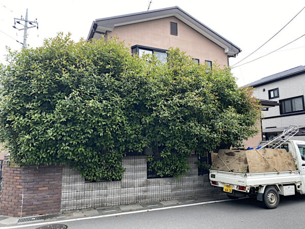 ベニカナメモチの生垣の伐採作業/埼玉県上尾市
