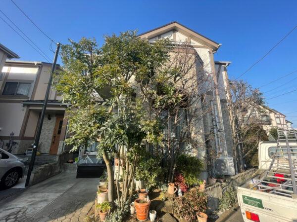 シマトネリコ、エゴ、バラ、コノテガシワ、植木の剪定/さいたま市大宮区