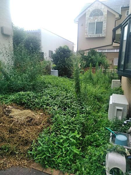 草刈り、除草剤散布、シマトネリコ抜根/埼玉県ふじみ野市