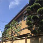 庭木の剪定/宮代町