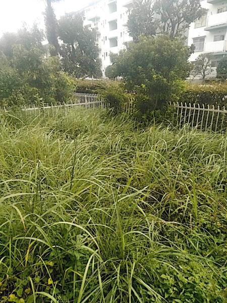草刈り、防草シート張り、花壇作り、低木抜根作業/さいたま市見沼区