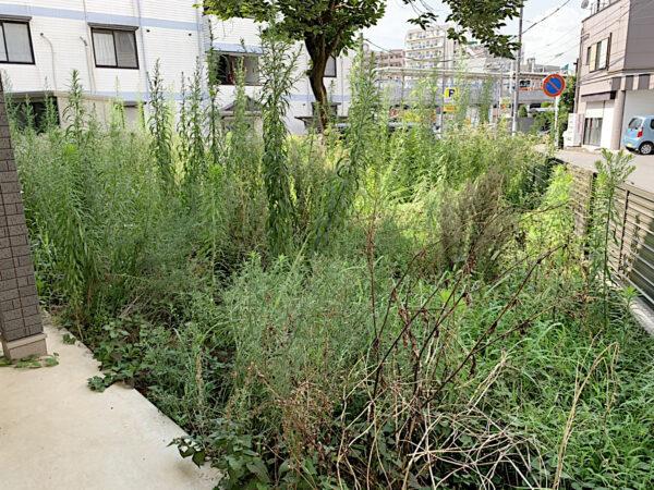 草刈りとカキの木の伐採作業/埼玉県朝霞市