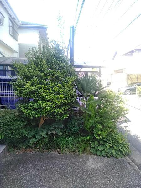 庭木の剪定と抜根、除草作業/埼玉県上尾市