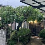 藤棚剪定、サザンカ刈込、キャラ玉造、低木刈込、低木剪定/埼玉県上尾市
