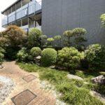 庭木の剪定、草取り、サツキ植え替え/さいたま市