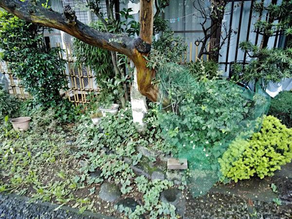 【除草作業】草取り/東京都新宿区