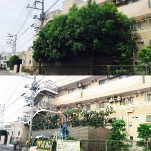 庭木が大きくなったら依頼できる人気の専門店ニワナショナルです。