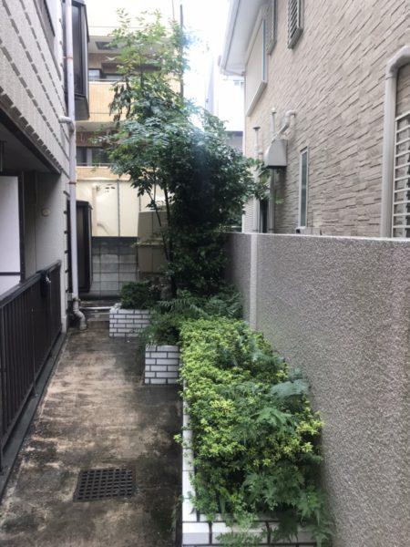 マンションの植栽切り下げ剪定/川口市