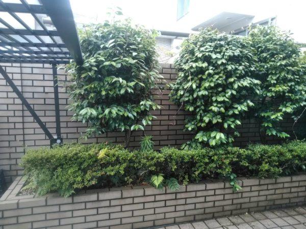6.23  川口市 庭木剪定