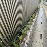 フェンス外の植栽/埼玉県上尾市