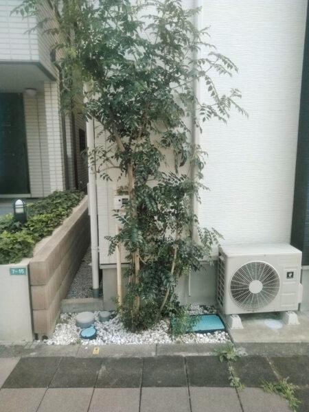 シマトネリコの抜根作業/さいたま市浦和区