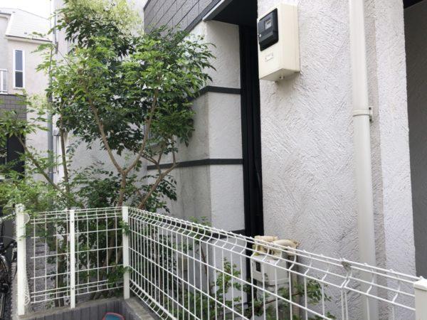庭木(シマトネリコ、アベリア)の抜根/世田谷区